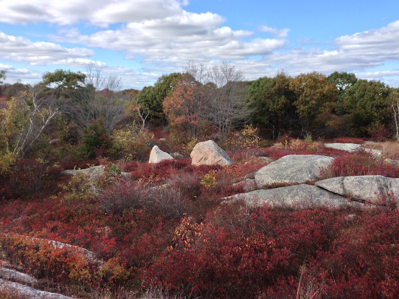 The Island Woods Of Cape Ann